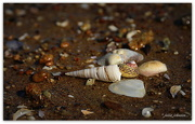 22nd Dec 2016 - Beach treasures...
