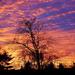 December sunset by mittens