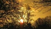 22nd Dec 2016 - December sun