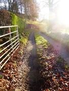 22nd Dec 2016 - Walk this way, we have sunshine  on offer