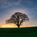 Naked Oak by rjb71