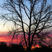 Sunrise Streak by milaniet