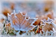28th Nov 2016 - frosted