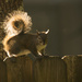 Sunlit Squirrel! by rickster549