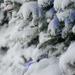 Fresh Newfoundland snow.   by novab