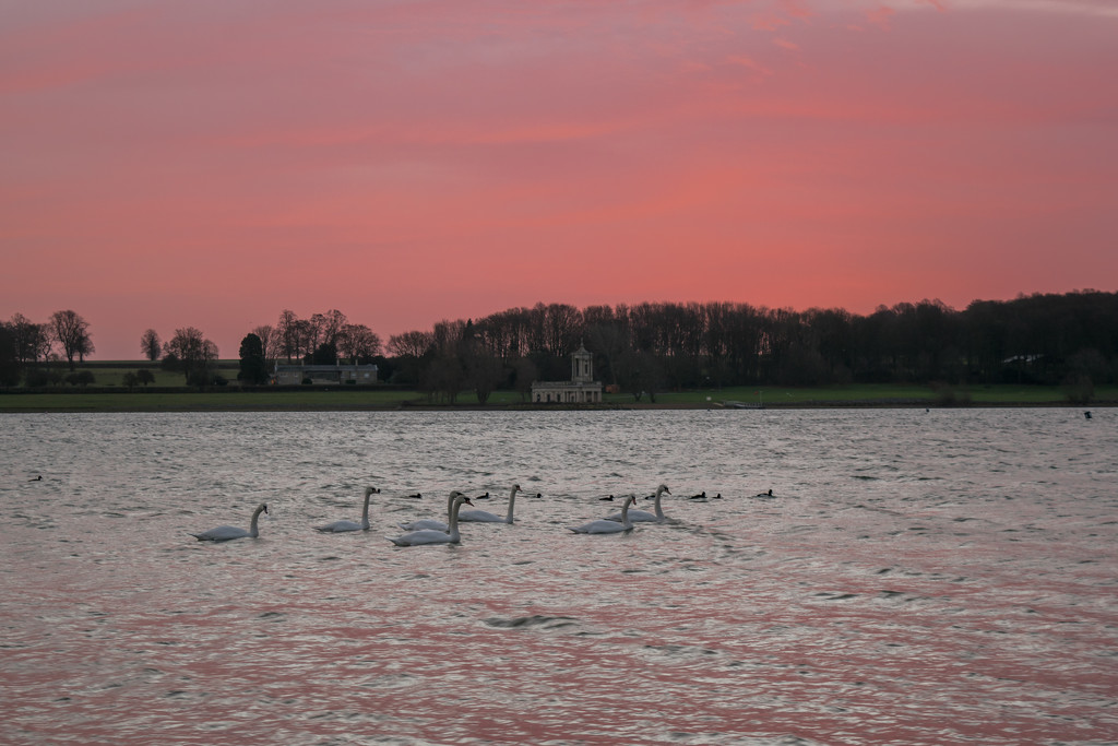 Seven Swans a Swimming! by rjb71