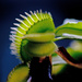 Carnivorous Plant by dianen
