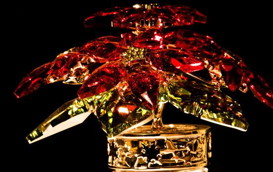 Crystal Poinsettia by randystreat