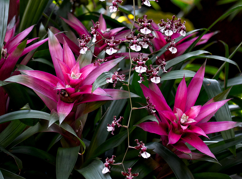 Bromeliads and Tiny Orchids by gardencat