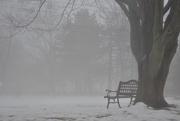 26th Dec 2016 - Fog