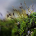 Moss Outcropping by evalieutionspics