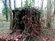 27th Dec 2016 - Little House in the Big Woods?
