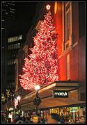 27th Dec 2016 - Macys Tree