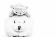 26th Dec 2016 - (Day 317) - Polar