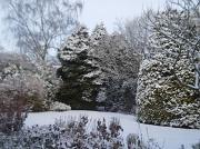 19th Dec 2010 - Winter Garden.
