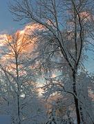 30th Dec 2016 - Snowy