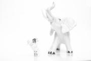 30th Dec 2016 - (Day 321) - Ivory