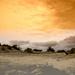 Desert by yaorenliu