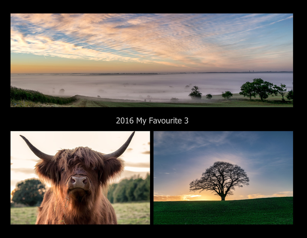 Favourite 3 from 365 2016  by rjb71