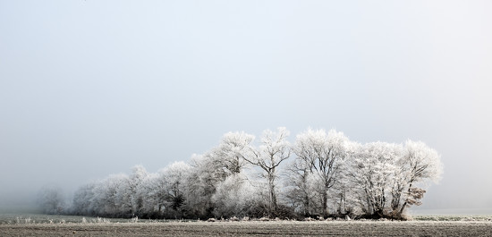 Project 52: Week 53 - Frosty Trees by vignouse