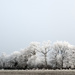 Project 52: Week 53 - Frosty Trees