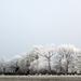 Project 52: Week 53 - Frosty Trees