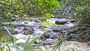 30th Dec 2016 - Cool Rain Forest Stream