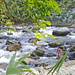 Cool Rain Forest Stream by ianjb21