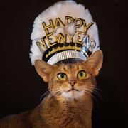 1st Jan 2017 - Happy New Year!
