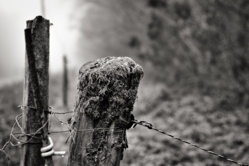 PLAY January - Nikon 50mm f/1.4G: Occasional Fence-Post 14 by vignouse