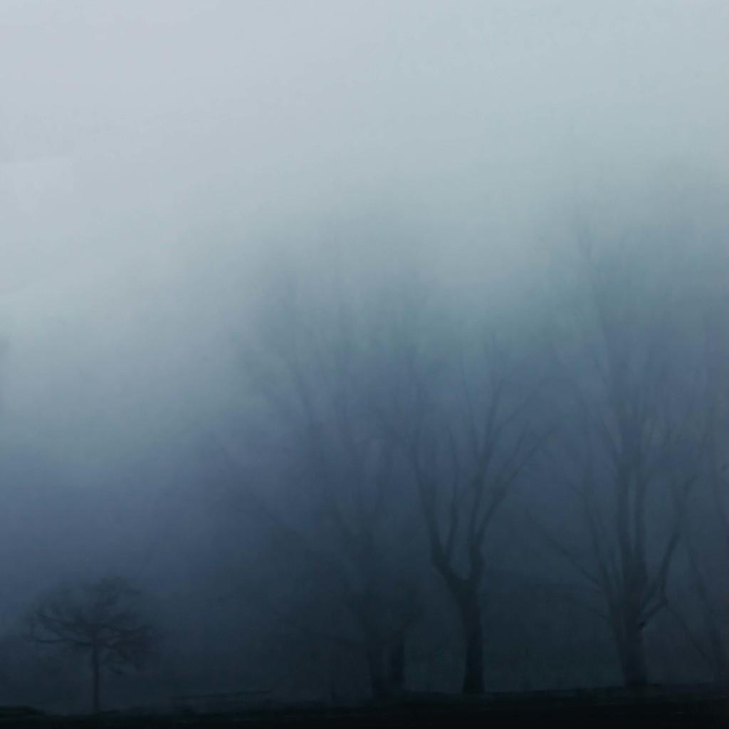 350 Misty by domenicododaro
