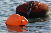 2nd Jan 2017 - Buoys will be buoys!