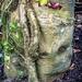 Sad Tree..... by swillinbillyflynn