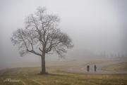2nd Jan 2017 - Foggy Day