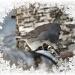 Snow Bird by bluemoon