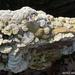 Forest Fungi #1