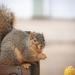 happy squirrel by lynnz