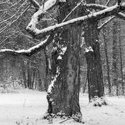 6th Jan 2017 - Dancing in the snow