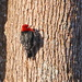 WooHoo!!! - My First Woodpecker by terryliv