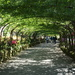 Laburnam Walk, Bodnant Gardens