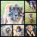 2017 01 08 - Finlay's friends