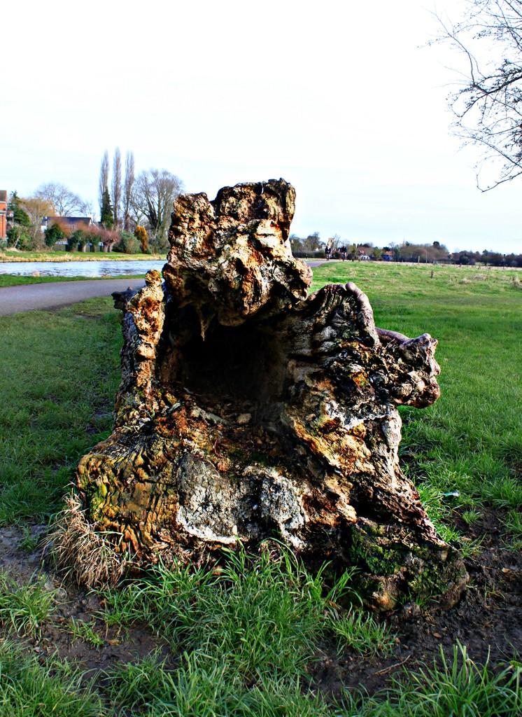 Fallen tree by kimcrisp