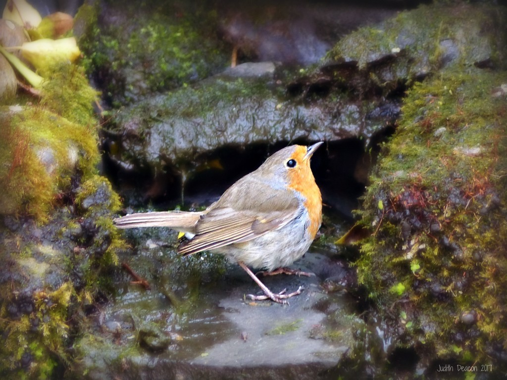 Where's the water then? by judithdeacon