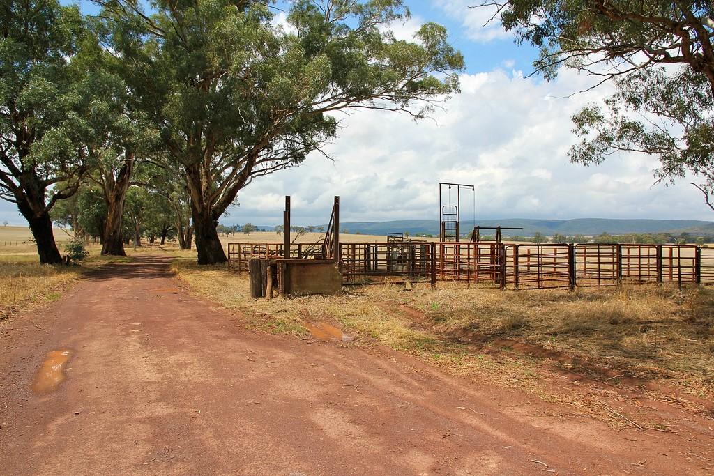 Cattle yards by leggzy