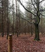 9th Jan 2017 - Wet Woodland Walk