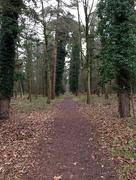 8th Jan 2017 - Thetford Forest