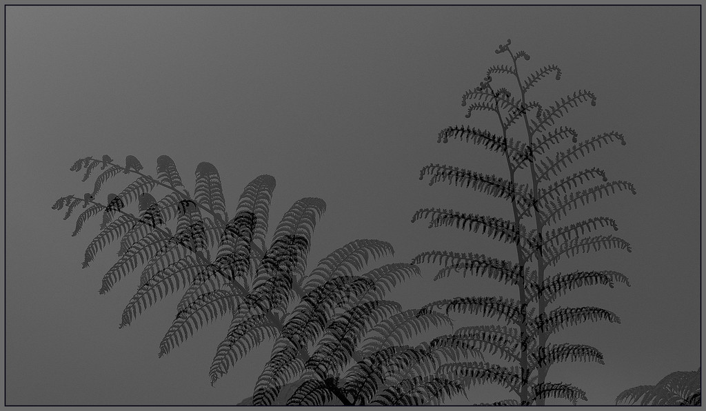 The silver fern by dide