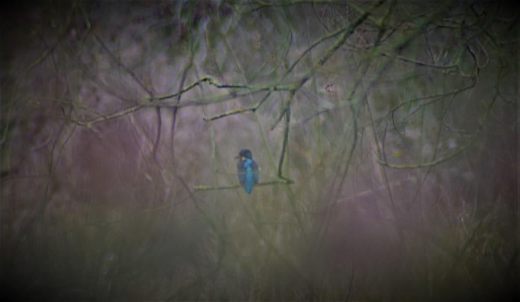 I Saw A Kingfisher!!!!!! by 30pics4jackiesdiamond