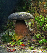 3rd Jan 2017 - A frosted saddle stone in the garden..