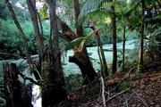 11th Jan 2017 - Green Algea  on Petrie Creek this morning